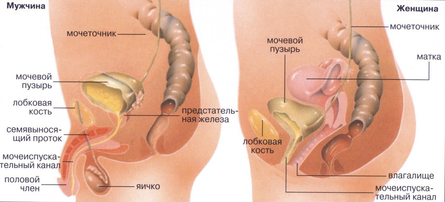 Как сходить в туалет по большому после операции на геморрой