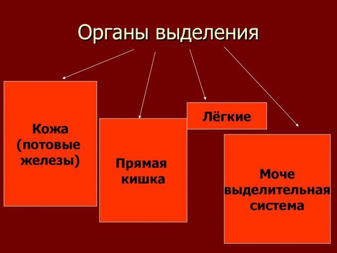 органы выделения